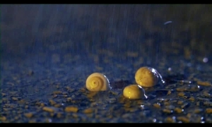 01.snails.in.the.rain